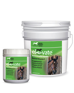 Elevate Powder