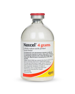 Naxcel antibiotic