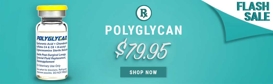 Polyglycan for Horses Flash Sale