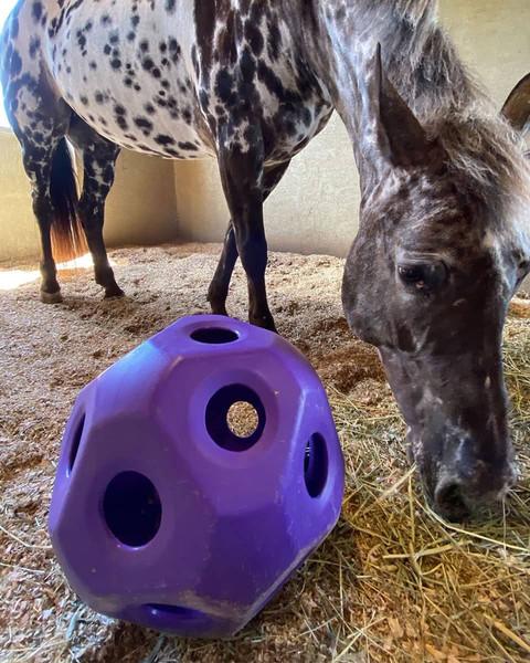 Equi-Essentials Slow Feed Hay Ball